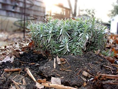 frost_heaving01.jpg
