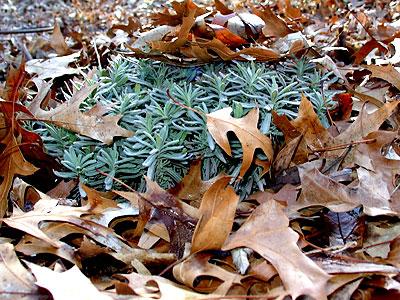 frost_heaving02.jpg