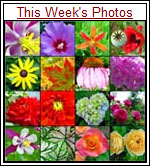 This Week's Phots